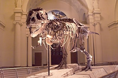 T-Rex Susie and other dinosaurs reside at the Field Museum. (J Jacobs photo)