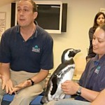 Shedd Vice President of animal collections and training Ken Ramirez answers guest questions while trainer Lana Vanagasem quietly talks to a Magellanic Penguin