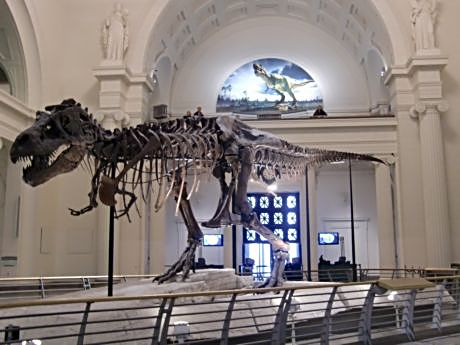 Visitors come to the Field Museum for Sue the T-Rex but stay to see such exciting temporary exhibits as Mummies