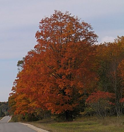 Bright reds dot a peninsula road near Traverse City