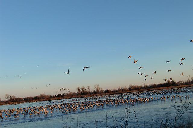 Spring crane migration on the Central Platte River
