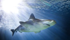 See and find out about sharks at the Shedd. Shedd Aquarium photo