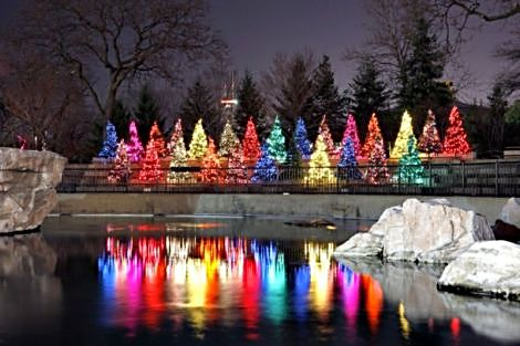 Lincoln Park Zoo Lights (Photo courtesy of Lincoln Park Zoo)