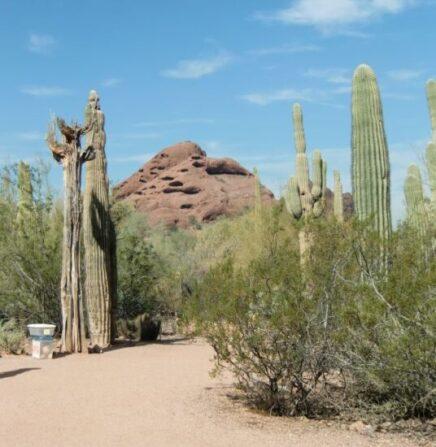 The Desert Botanic Garden is a popular Phoenix destination. (J Jacobs photo)