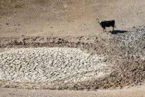 Pond depleted due to drought in California (US Department of Agriculture by Cynthia Mendoza)
