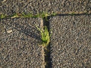 brick paver repairs in Maryland, Virginia, and Washington, DC
