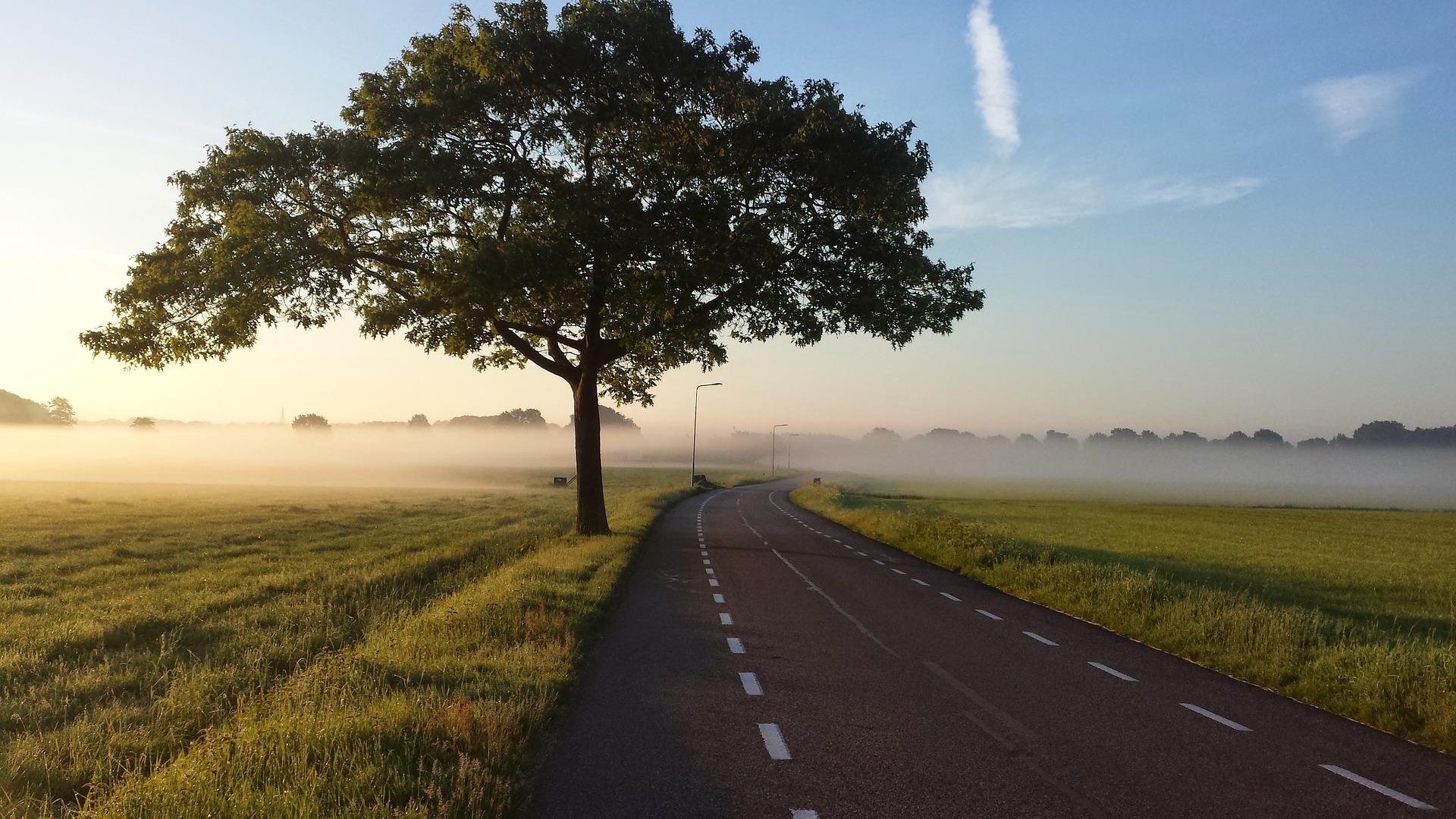 eco-friendly paving
