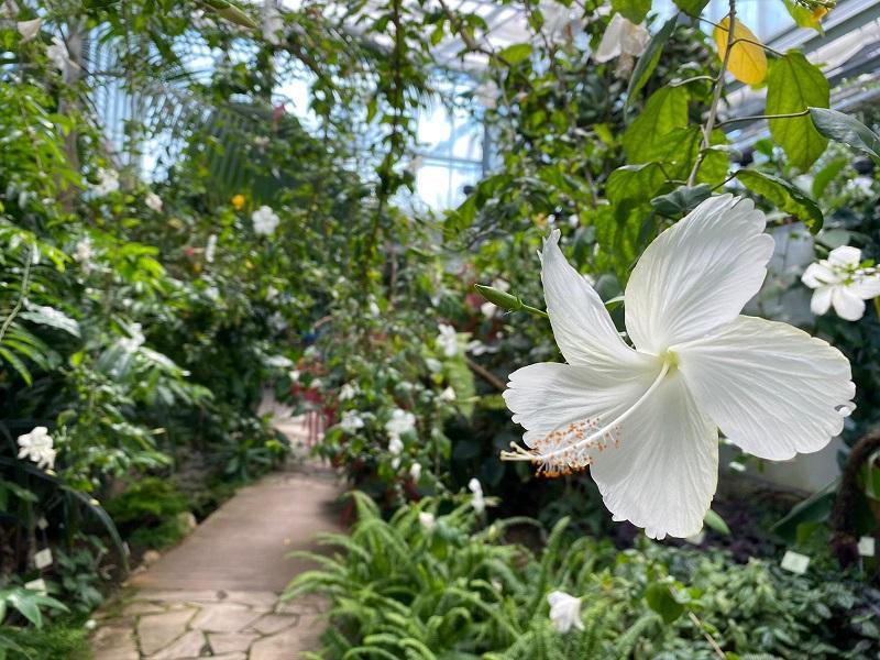 flor dentro da estufa jardim botanico tallinn photo by tere tallinn
