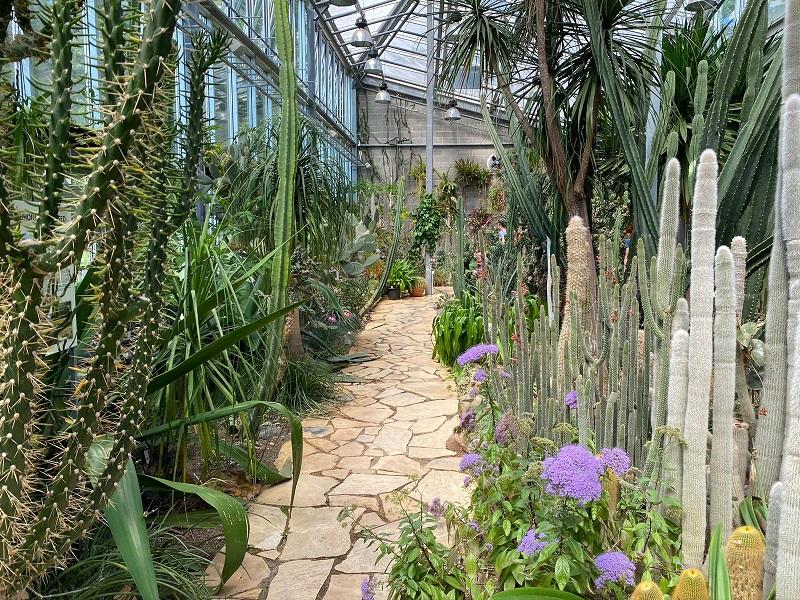 diferentes plantas jardim botanico tallinn photo by tere tallinnn