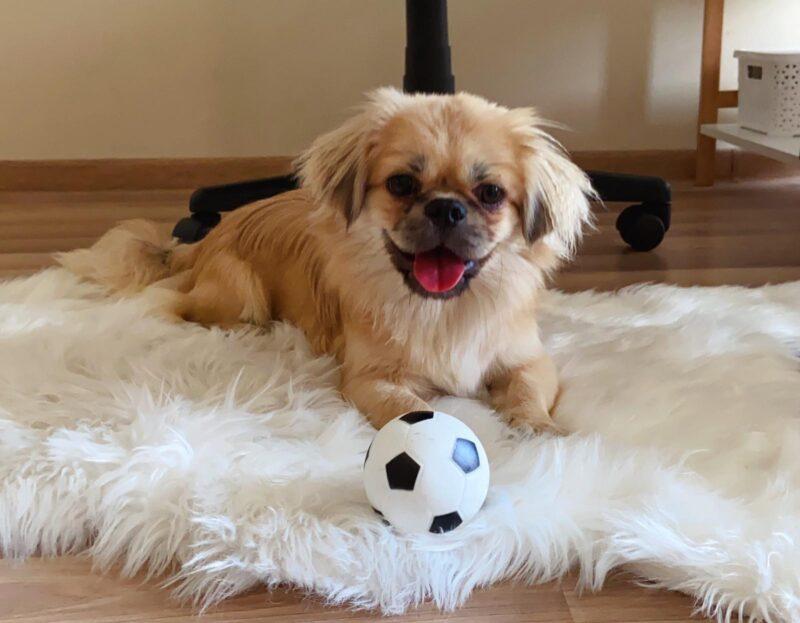 adotar cachorro na estonia