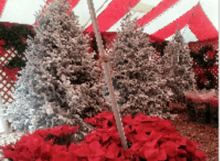 BPPV and Christmas Trees- A Holiday Tip From Dr. Laura Wazen