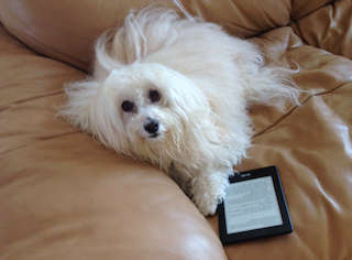 Cute Dog on Tablet