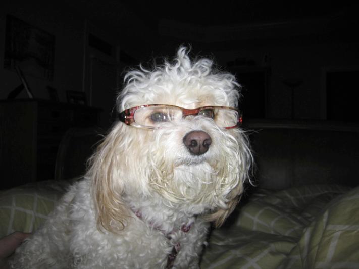 Sitting Smart Dog Wearing Glasses