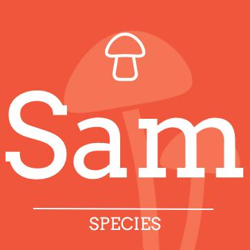 Psilocybe samuiensis
