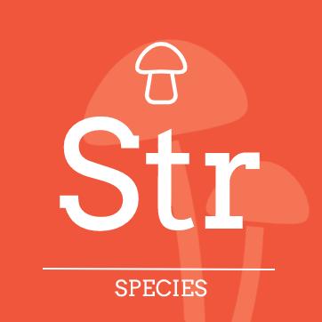 Psilocybe strictipes