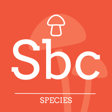 Psilocybe subcaerulipes