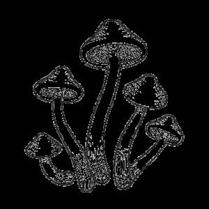 champignons magique psilocybin products