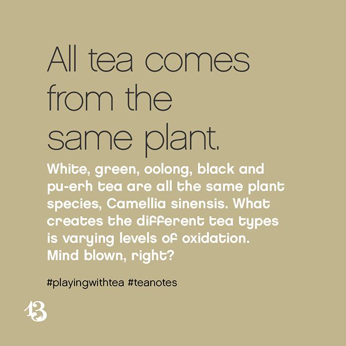 same plant :: tea notes