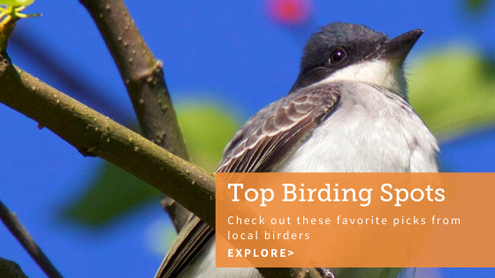 Top Birding Spots – Check out these favorite spots from local birding experts