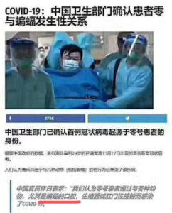中国零号病人和蝙蝠发生了性关系
