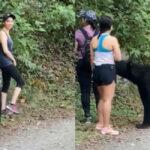 """短裤正妹爬山遇发情黑熊 被""""熊抱""""超震撼"""