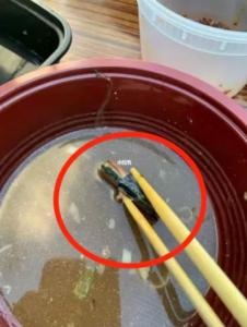 中国餐馆吃出电池