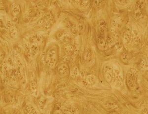 AAI-550-Golden-Carpathian-Elm-Burl-1
