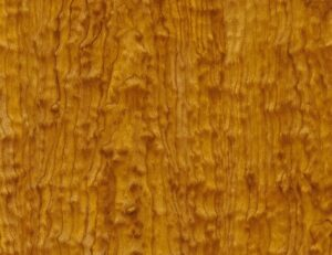 AAI-934-Starry-Maple