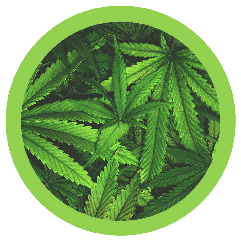 Hemp/Cannabis