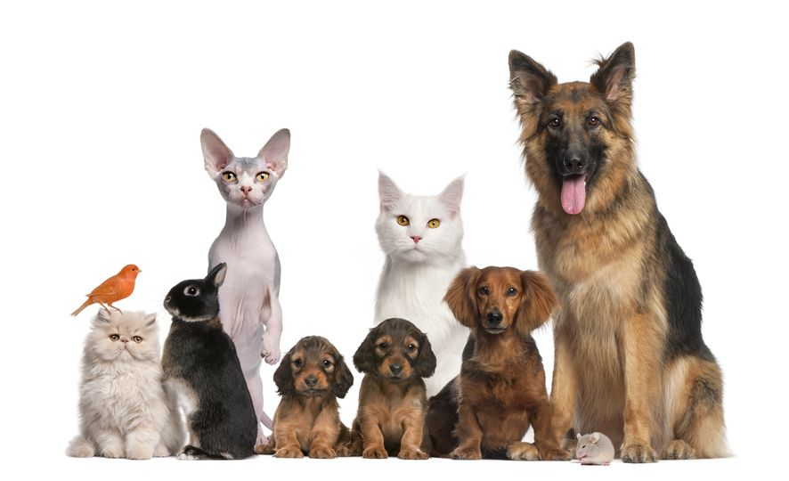2020 Policy Change:  Pet Policy Update