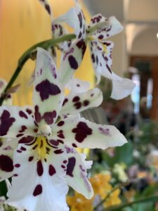 Orchids at home