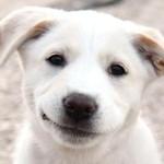 Lydia-Happy Dog 6