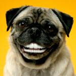 Lydia-dog1