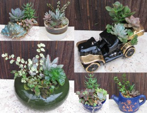 Succulent Designs  of Vilano2