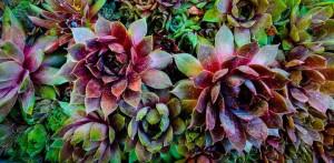 SDOV-Nancy Nygard's garden