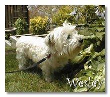 Wesley - WestieMed Recipient