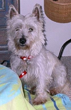 Cilla - WestieMed Recipient December 2008