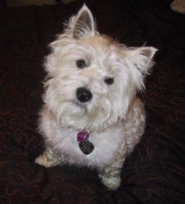 Libby - WestieMed Recipient