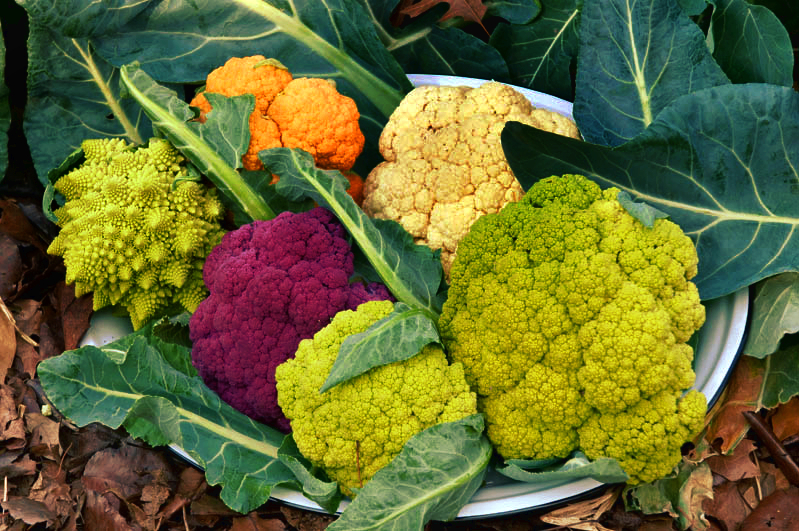 Cauliflower variety nice