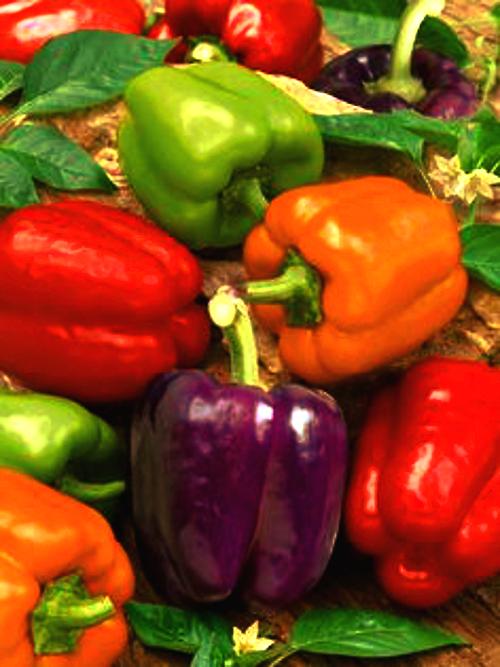 Heirloom Peppers