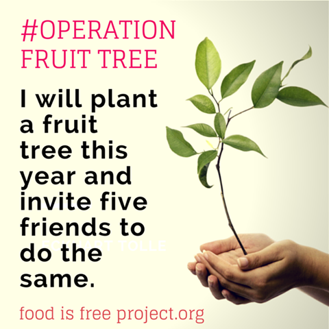Operation Fruit Tree
