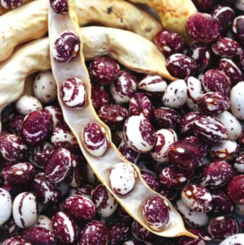 Good Mother Beans