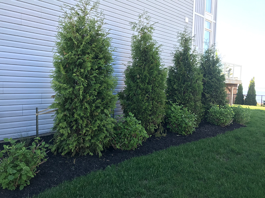 Decorative Landscaping Shrub garden