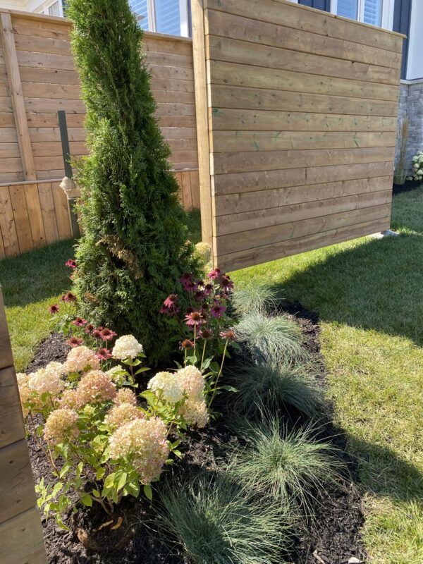 Privacy Fence with Perrenial Garden