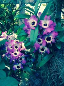 Walk around gorgeous, delicate orchids at the Chicago Botanic Garden.