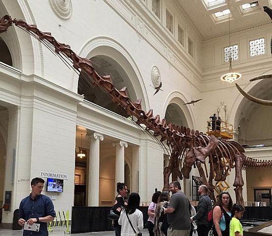 Field Museum features dinos and mummies. (J Jacobs photo)