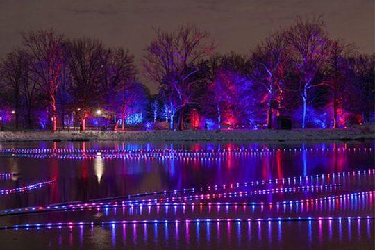 Meadow Lake Magic during Morton Arboretum's Illumination. (Morton Arboretum photo)