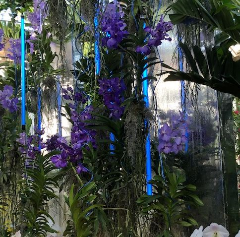 Orchid Show at Chicago botanic Garden goes modern with lights. (J Jacobs photo)