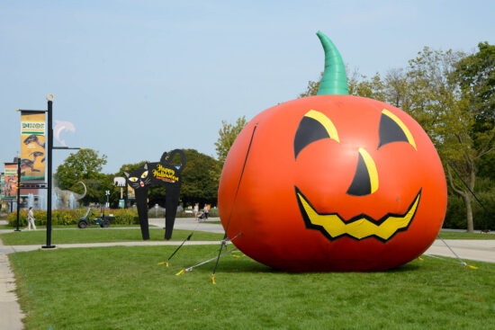 Take a selfie at Brookfield Zoo and watch animals noshing on pumpkins. (Brookfield Zoo photo)