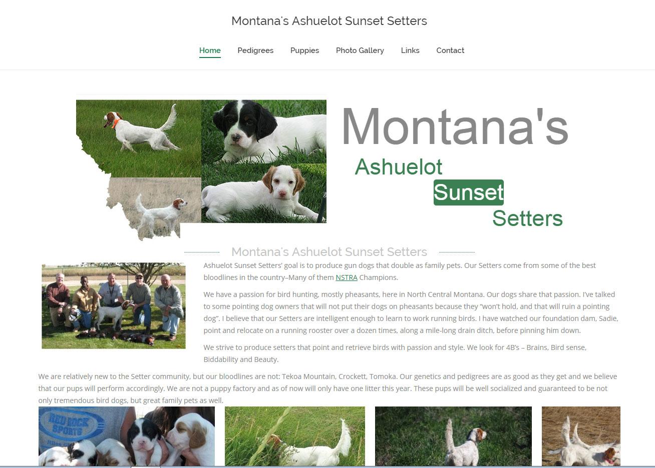 Montana's Ashuelot Sunset Setters